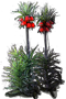 Crown Imperial 'Rubra'